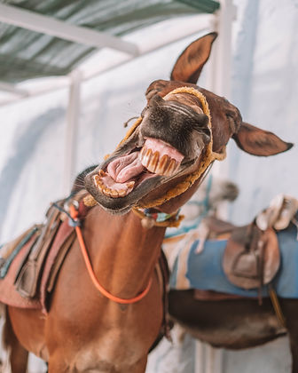 Best Phot Spots in Santorini - laughing donkey