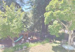 backyard_edited