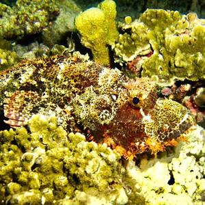 Open trip Banda Sea. More info & schedul