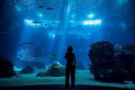 04_Um planeta um oceano_ Oceanário de Li