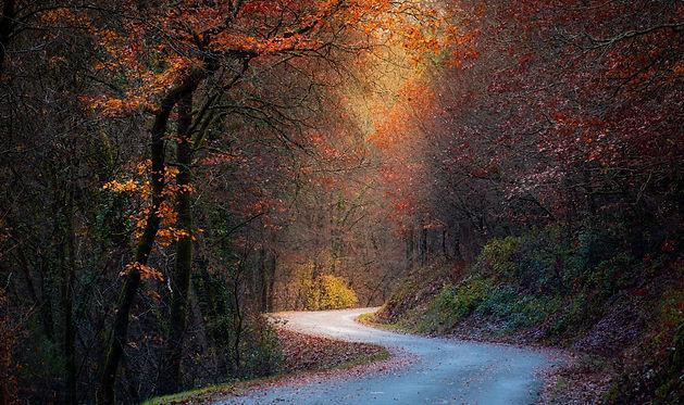 Sunbeam Autumn.jpg