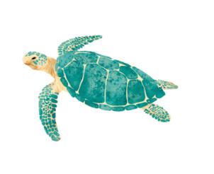 HipSea Swimwear-Turdle.png