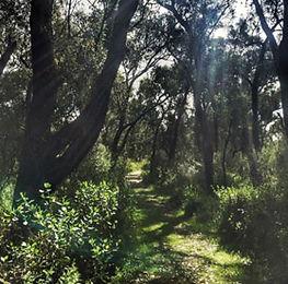 ghost trail.jpg