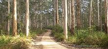 boranup forest.jpg
