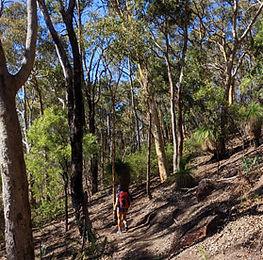 echidna trail.jpg