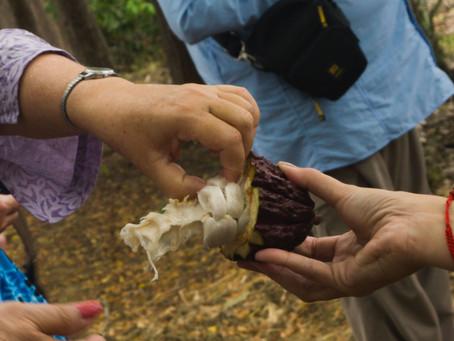 Agroturismo, alternativa turística em Guayas