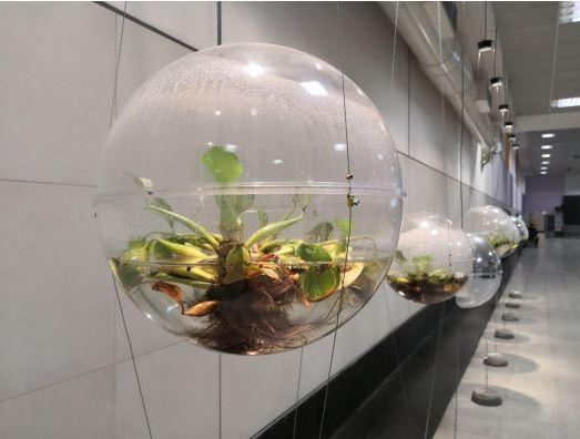 biosferas.JPG