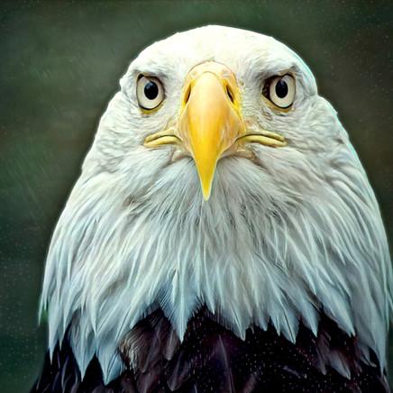 34 Eagle.jpg