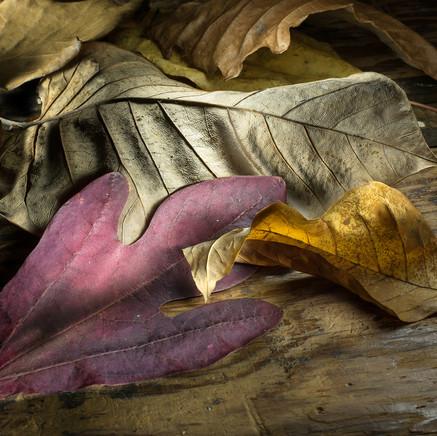 54 Autumn Leaves.jpg