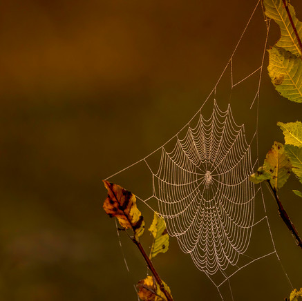 29 Web of Fall.jpg