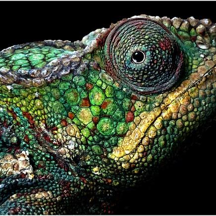 73 Chameleon.jpg
