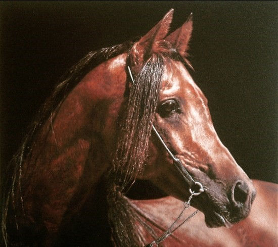 Арабская лошадь.jpg