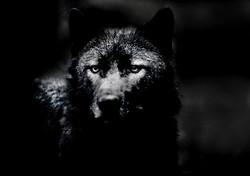 Howl my pain at the Moon b