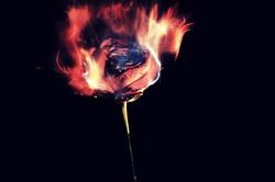 The Rose of Paracelsus bb