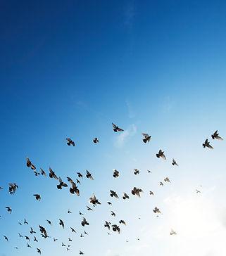 Less Pest Bird Control Services