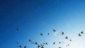 【#コロナ帰国難民】渡り鳥に国境なし、今年も飛来シーズンのオランゴ島