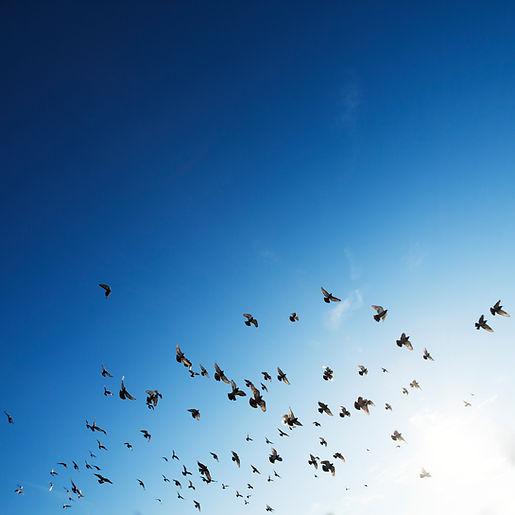 Flocken