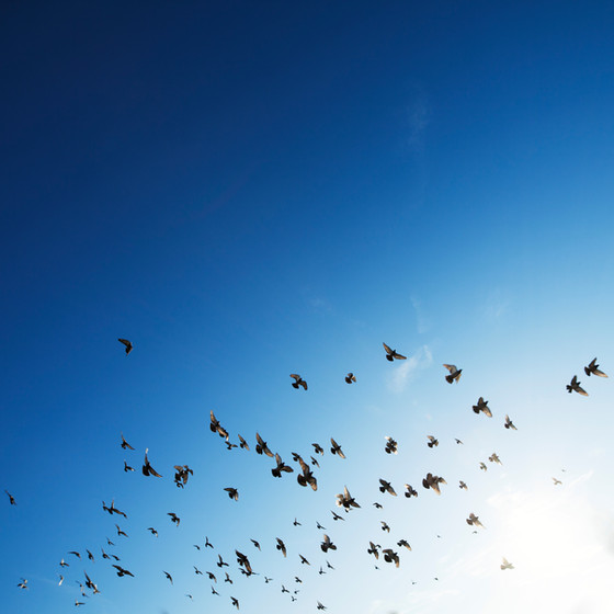 The Birds in the Air...