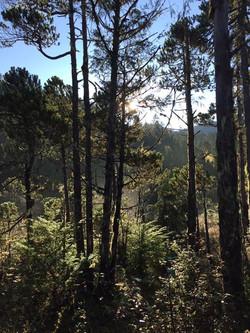 Volunteer Trail