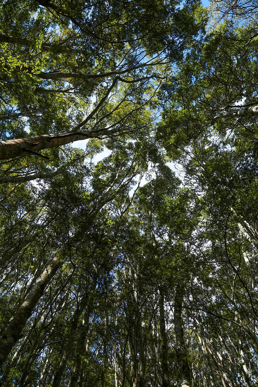 Beech Forest Heaven