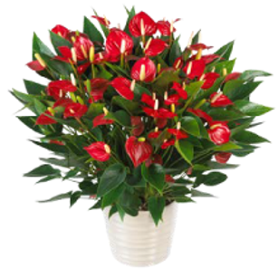 Million Flowers Red