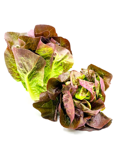 Red Leaf Lettuce - Hirayama Farms (1-2 Heads)