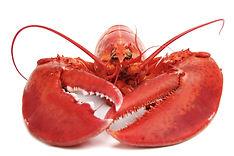 Lobster-1.jpg