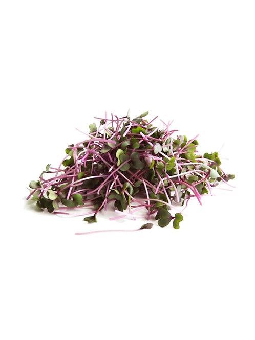Red Cabbage Microgreens - Maiau Farms (1.5 Ounce)