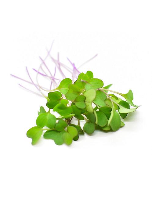 Purple Kohlrabi Microgreens - Maiau Farms (1.5 oz)