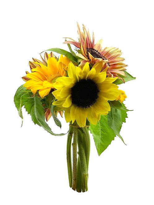Fall Sunflowers - Goo Farms (1 Arrangement)