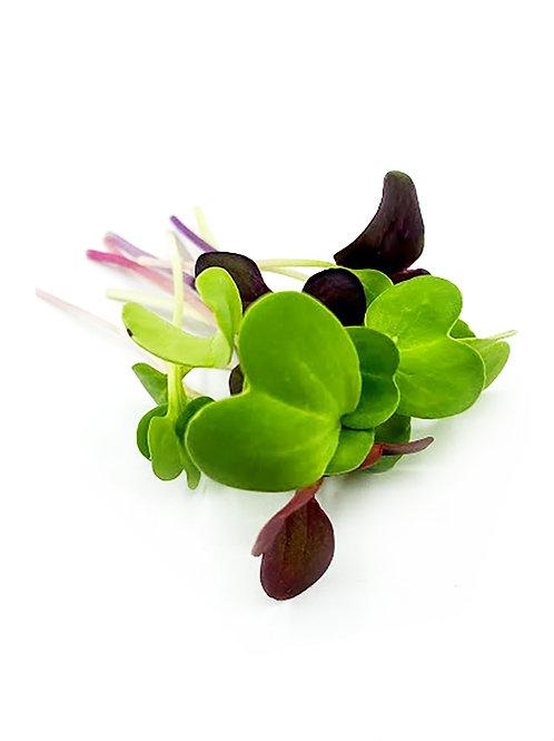Radish Mix Microgreens - Maiau Farms (2 Ounces)