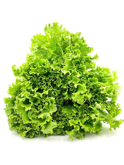 Leafy Green Lettuce - Hirayama Farms (18 oz)