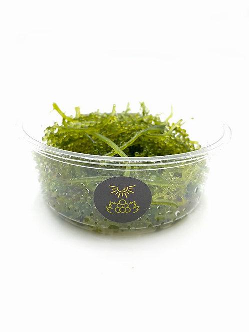 Kona Caviar (Umibudo) - Symbrosia (3 oz)