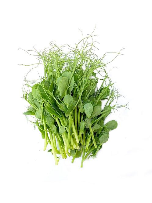 Pea Shoot Microgreens - Maiau Farms (1.5 oz)