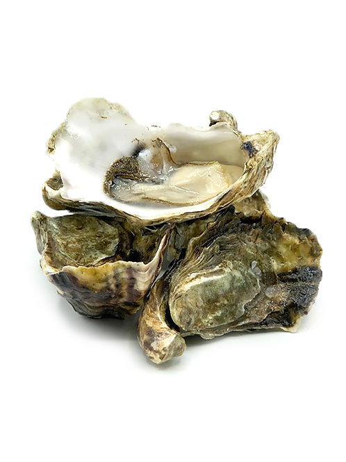 Live Kusshi Oysters - Kona Cold Lobsters (One-Dozen)