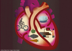 The Link between Heart and Gut