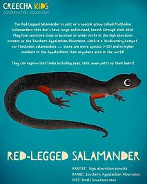 SALAMANDER_RED_LEGGED_POST.png