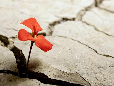 Resilienza: quando le avversità ci fortificano