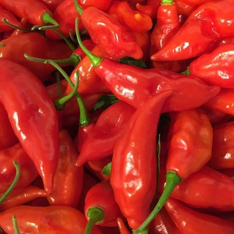 Paper lantern peppers! #pepperhead #garm
