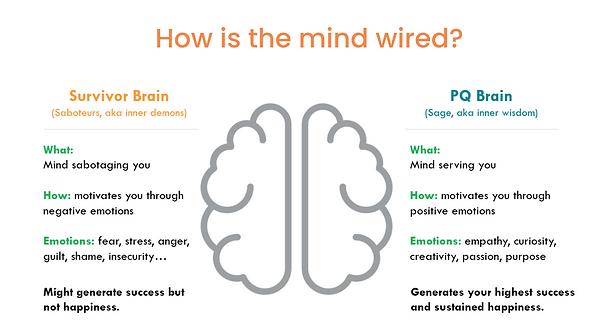 PQ brain.png