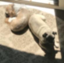 Kameron Richter dogs sleep