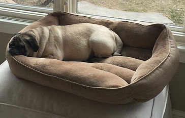 Kameron Richter pug sleep