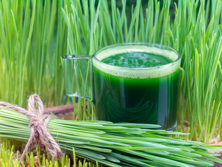 Wheatgrass for dogs?