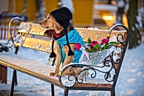 spaniel dog with flowers in winter.jpg