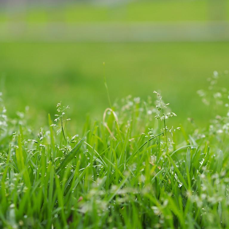 Brass on the Grass
