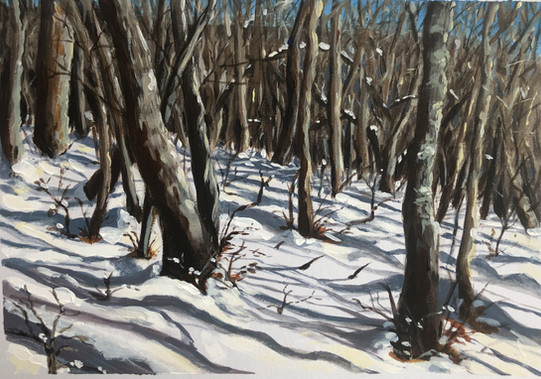 Snowy Woods - Sold