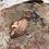 Thumbnail: Leopard Skin Jasper Leaf Shape
