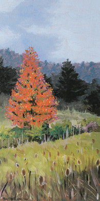 Fall Along Mill Creek Rd - In private collection