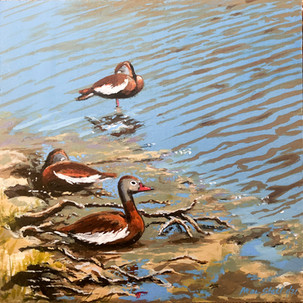 Red Bellied Whistling Ducks