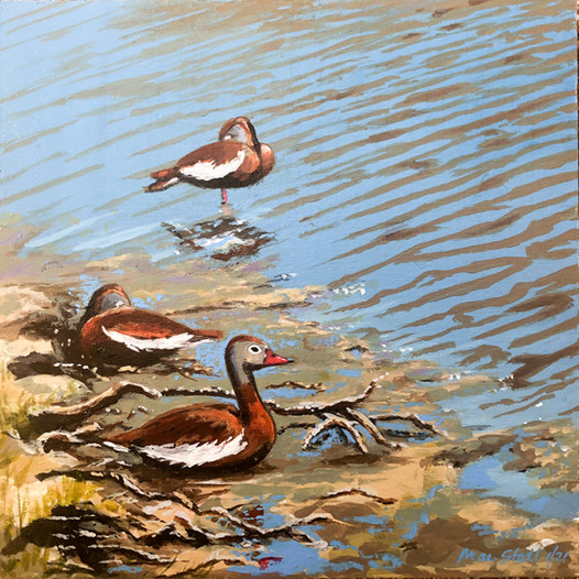 Red Bellied Whistling Ducks - Sold